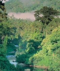 cameroun-forêt tropicale.jpg
